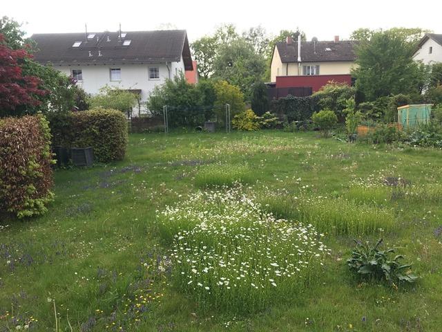 gwg-eg-wasserburg-am-inn-Blumenwiese-03