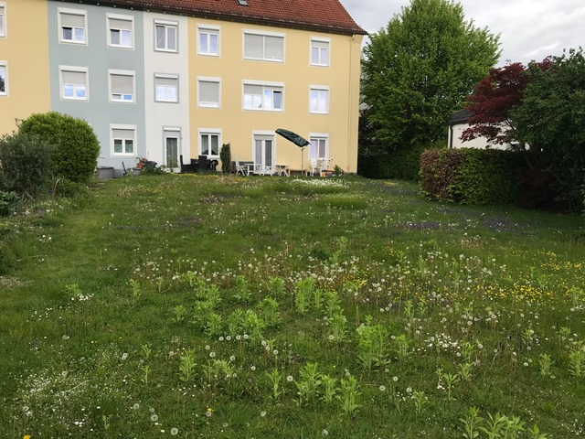 gwg-eg-wasserburg-am-inn-Blumenwiese-01